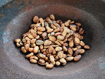 untoasted cocoa or cacao beans