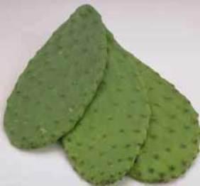 nopales or edible cactus