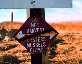 Do Not Harvest Oysters Mussels Clams Sign on beach