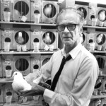 B.F. Skinner with pigeons