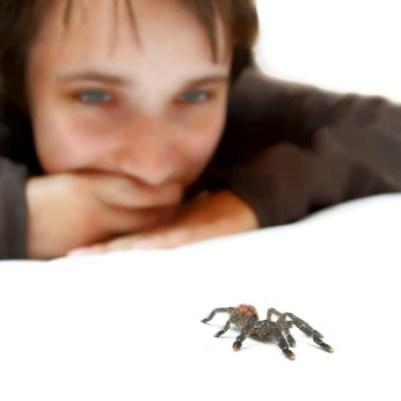 boy watching spider crawl, Image © Gudellaphoto