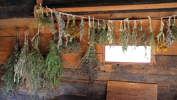 herbs hung for drying