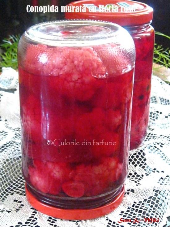 conopida-murata-cu-sfecla-rosie-1