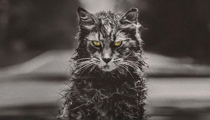 Pet-Sematary-2019-Trailer-cat