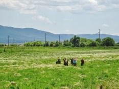 ethnie turque dans les champs de camomille