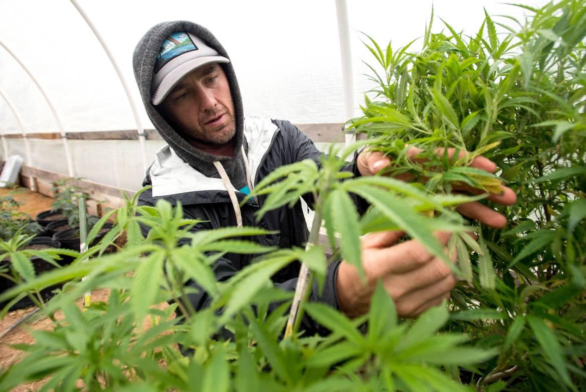 O que é grower e como aprender