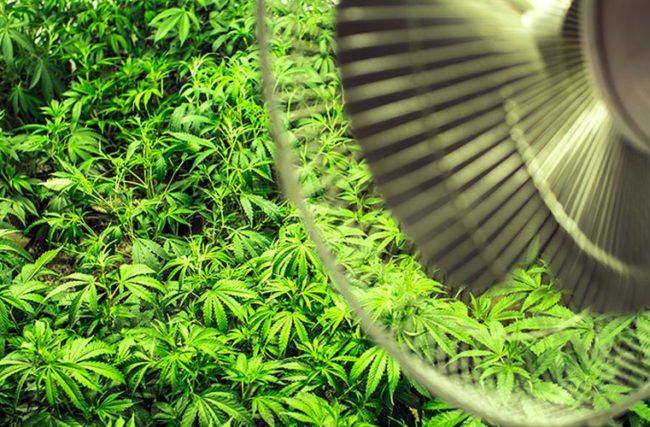 foto de um grow com o sistema de exaustão