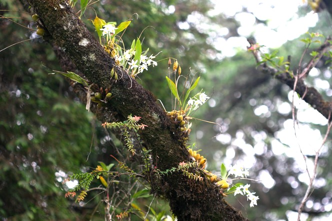 Article also G as well Epiphytes 20and 20Spreading 20seeds furthermore What Is Sphagnum Moss likewise Starting Another Dendrobium Nobile From. on growing orchids in bark