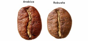 Formato do Robusta vs Arábica