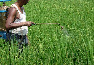 Aplicação inadequada de defensivos: Risco para o agricultor e para o consumidor.