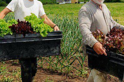 Produção orgânica gera mais empregos por área.