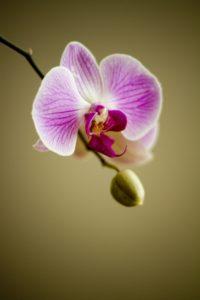 e-book como cuidar de orquídeas