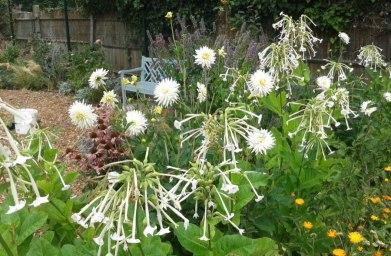 Cultivate-London-Salopian-Kitchen-Garden-Opening2