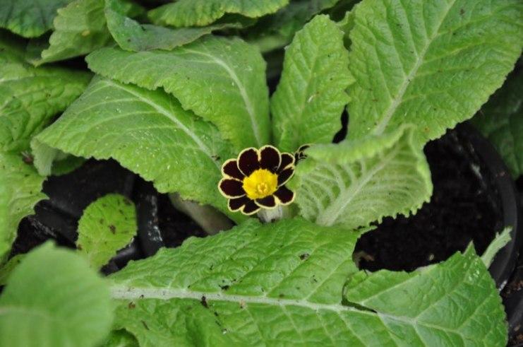 Cultivate-London-Salopian-Kitchen-Garden-Winter-Open-Day-20171