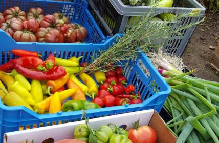 Salopian-Kitchen-Garden-Produce
