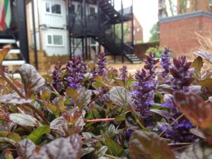 Cultivate London Corporate Volunteering 3