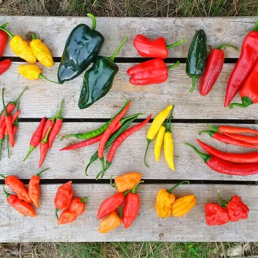 Oxfordshire Chilli Garden