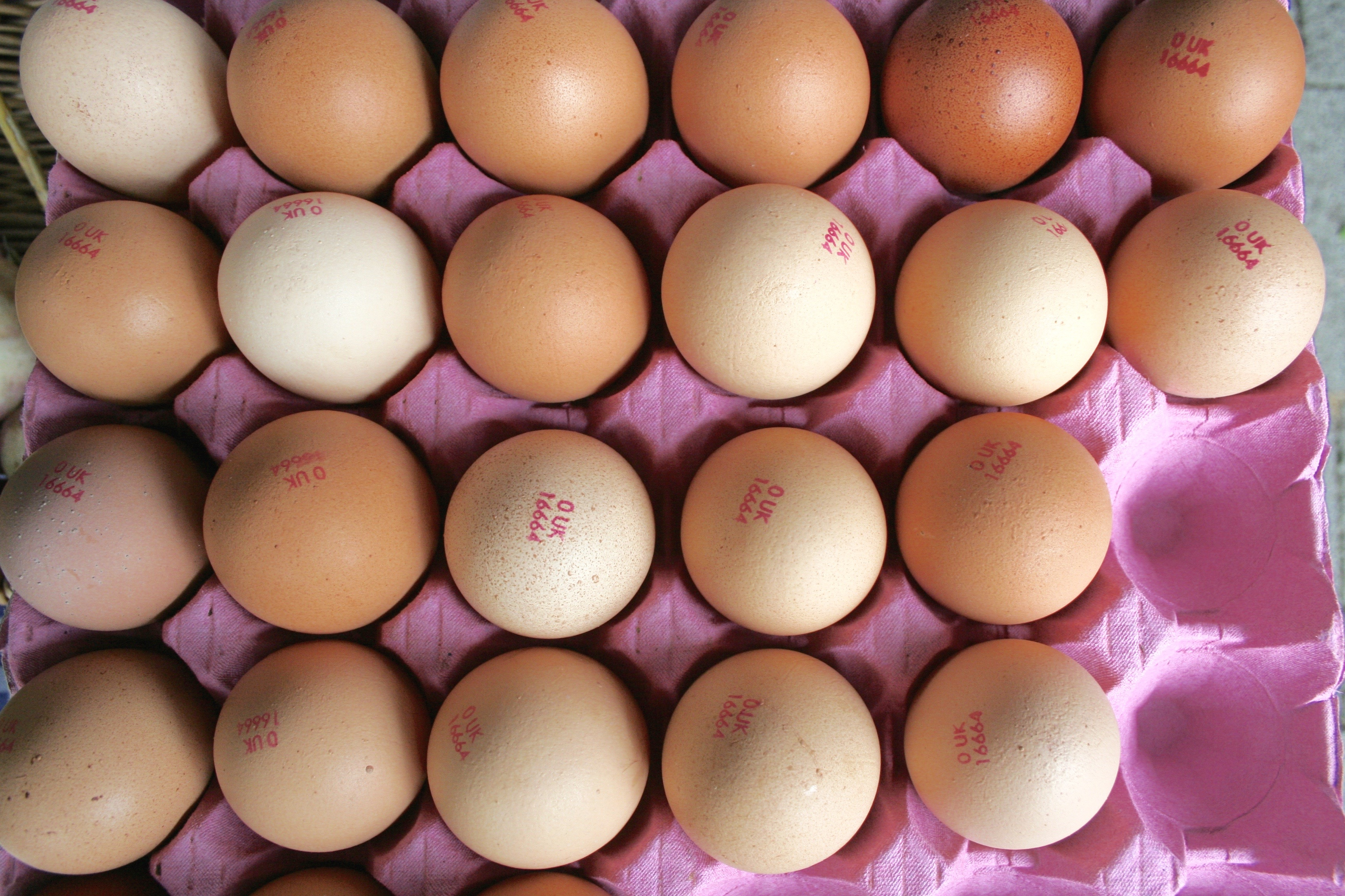 Ethical Eggs – Free-range vs Organic