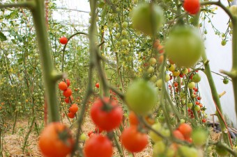 Surviving the seasons: polytunnels to the rescue!