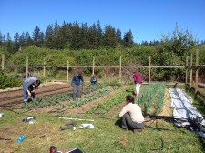 Apprentice lesson on irrigation at The Bayview Garden