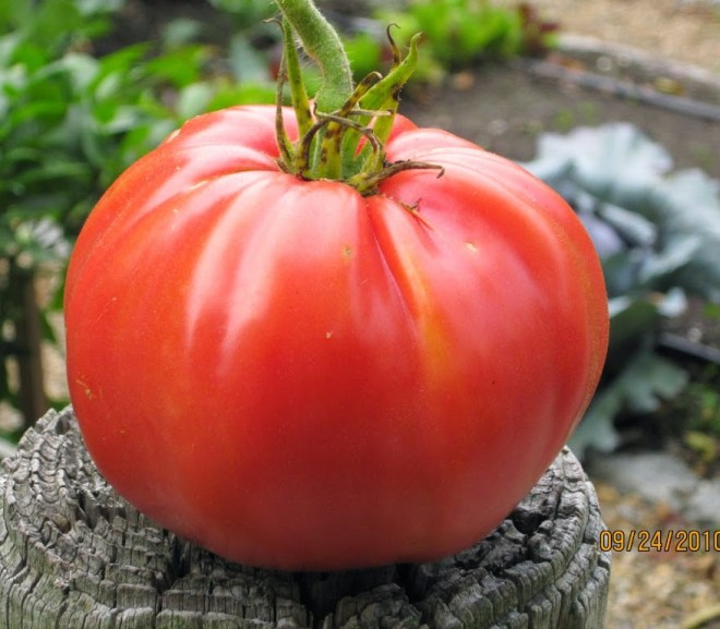 TOMATOES – WHAT I GREW IN 2014 AND WHAT I LEARNED
