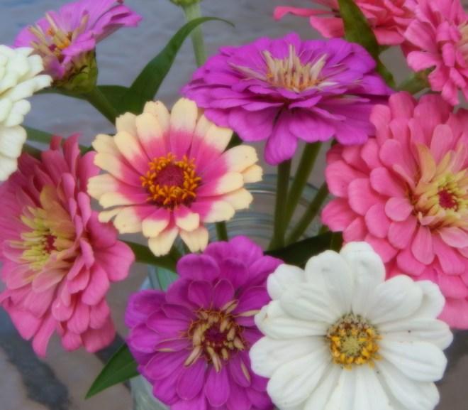 Garden Journal – 1st Week of October
