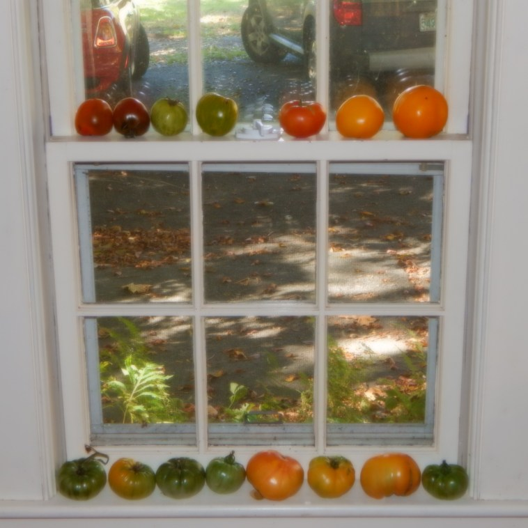 A WINDOW DECORATED WITH RIPENING TOMATOES