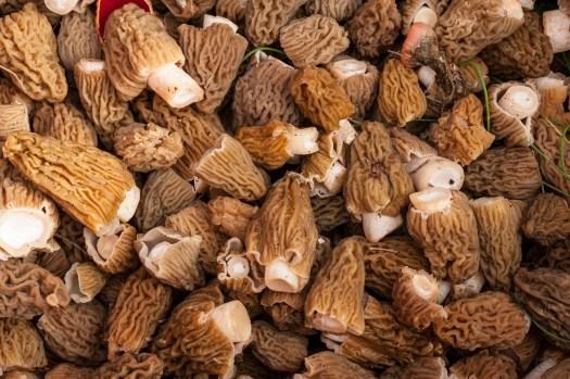 Les morilles sont également des champignons comestibles que l'on peux faire pousser!