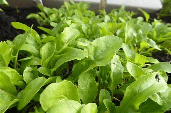 Cultivos da época: Plantar em Fevereiro