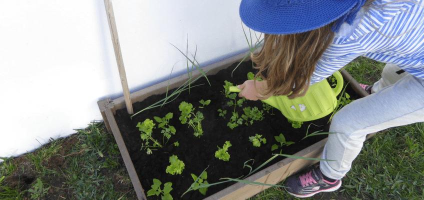 Jardinagem com crianças – 8 Benefícios