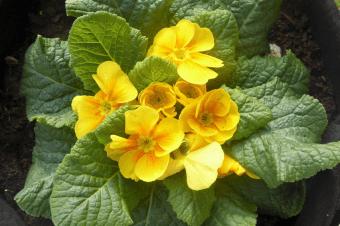 Cultivos da época – Plantar em Março