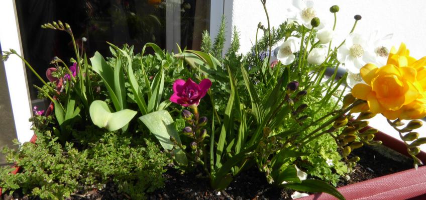 Cultivar na varanda – 4 regras de ouro!