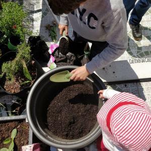 plantar uma árvore com crianças