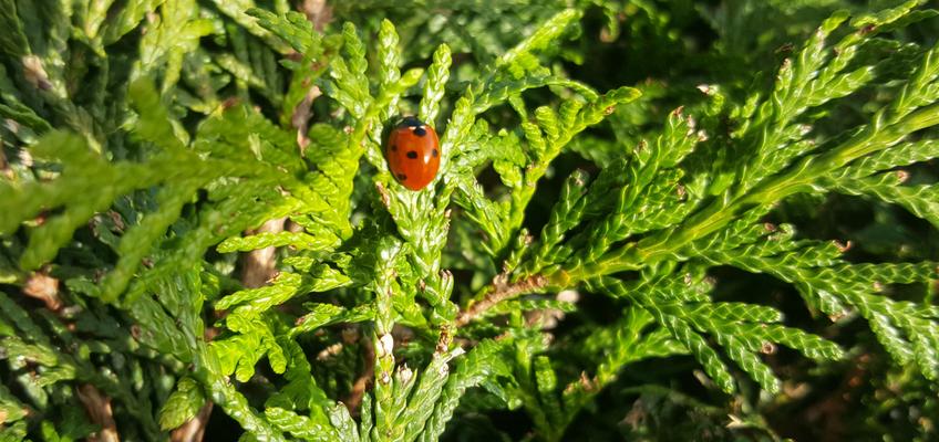 Aliados naturais da horta – 7 insetos nossos amigos!