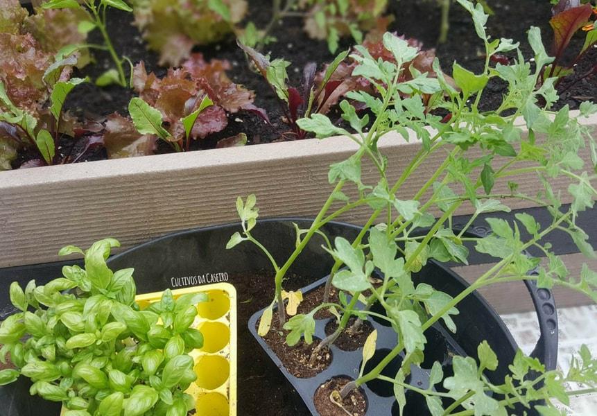 Cultivos da época – Plantar e colher em Maio