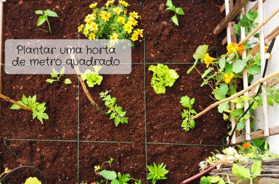 Como plantar uma horta de metro quadrado!