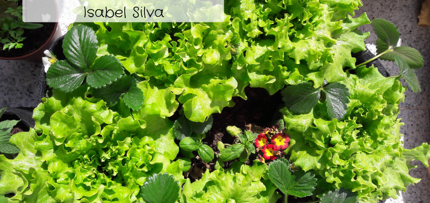 A MINHA HORTA – A horta da Isabel (Braga)