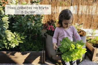 Mais colheitas na horta – 5 Dicas importantes!