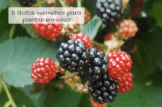 5 frutos vermelhos para plantar em vaso!