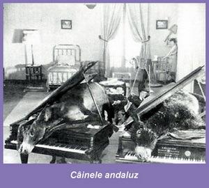 https://costintuchila.files.wordpress.com/2011/07/cainele-andaluz-luis-bunuel-film-suprarealist.jpg?w=500
