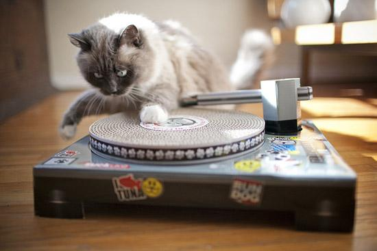 Cat scratch turntable culturageek.com.ar