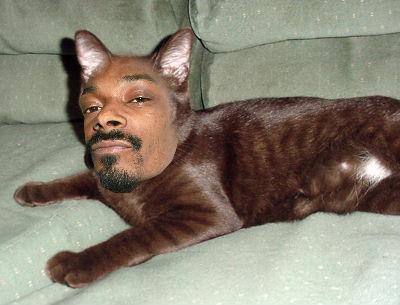 Snoop Cat - todos quieren compartir escenario con él