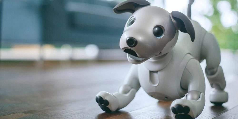 Resultado de imagen para mascotas regalo