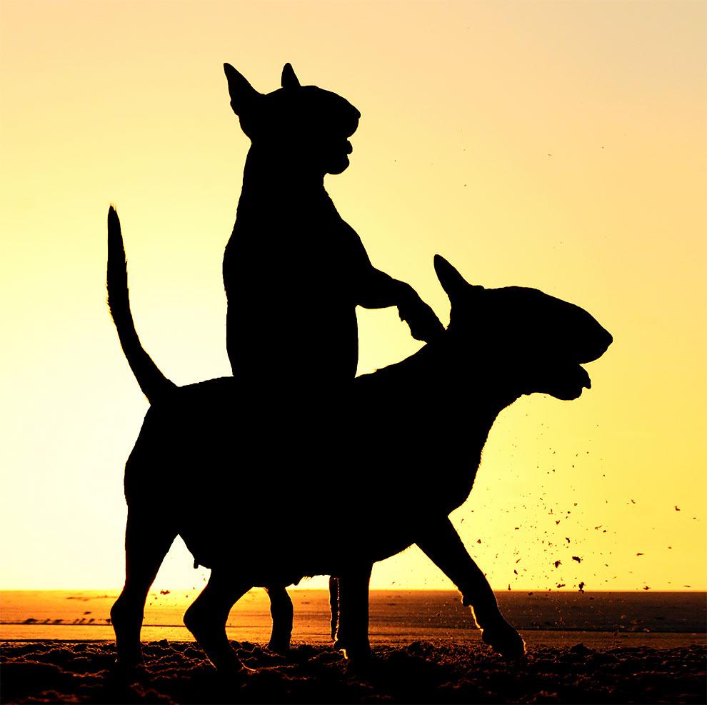 Premios de Fotografia de Animales Domesticos 2017 5