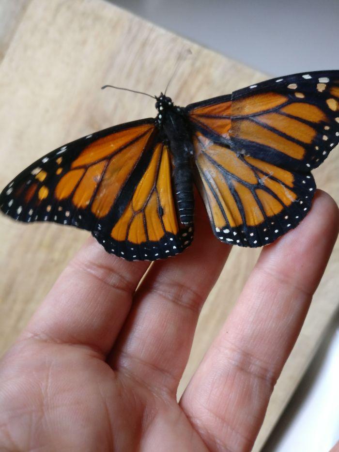 monarch butterfly.Cultura Inquieta 4