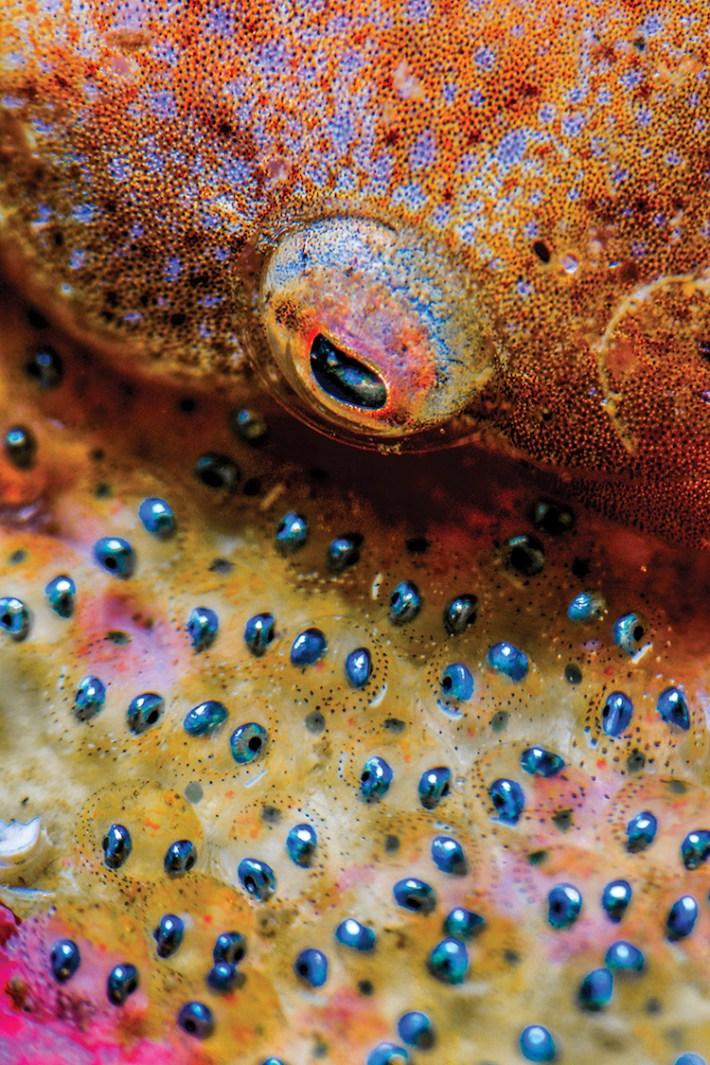 Scuba Diving 10 magazine concurso fotografía submaina mar vidasalvaje