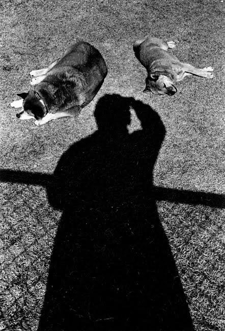 aido Moriyama Self portrait with Dogs 1997