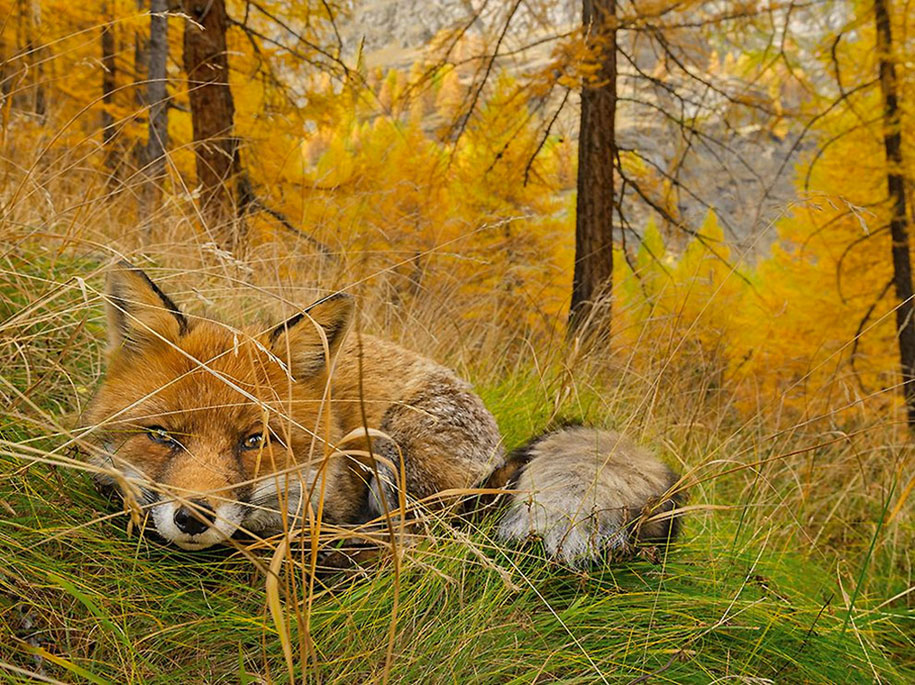 National Geographic best Photos 2015 16
