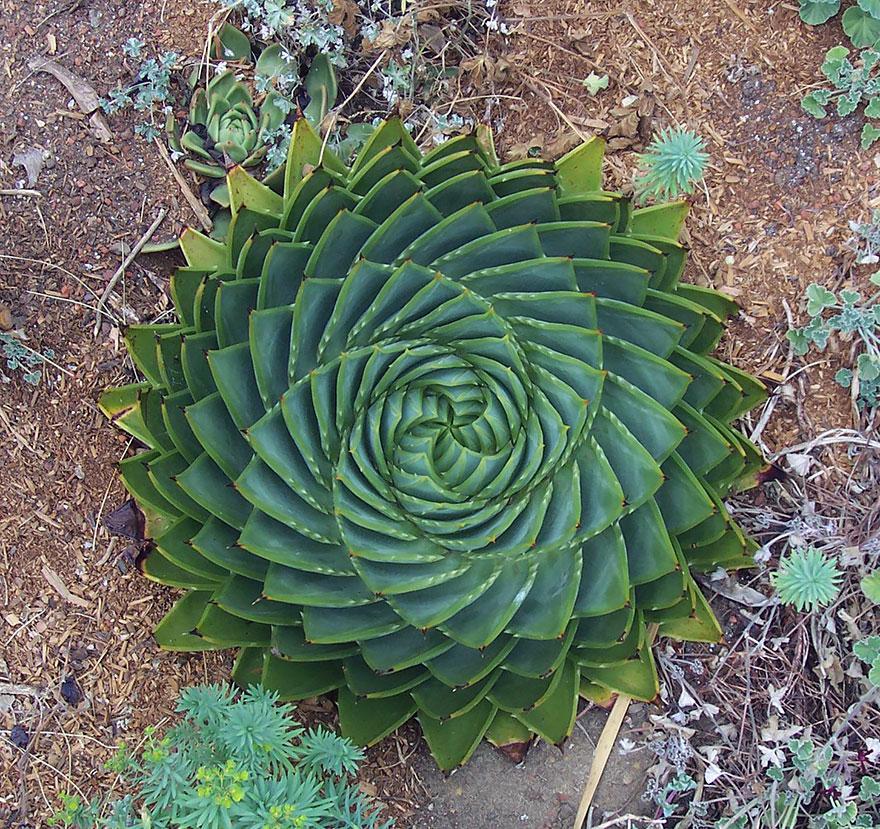 Geometrical Plants plantas geometricas Cultura Inquieta