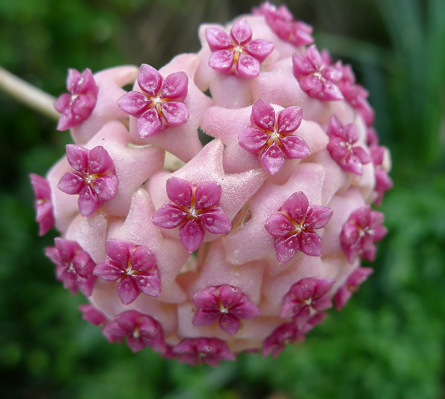Geometrical Plants plantas geometricas Cultura Inquieta10